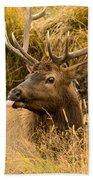 Elk Raspberry For Tom Beach Towel