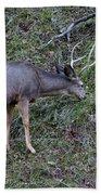 Elk With Antlers Beach Towel