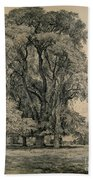 Elm Trees In Old Hall Park Beach Towel by John Constable
