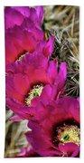 Engleman's Hedgehog Cactus  Beach Towel