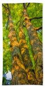 Enlightened Trees Beach Towel