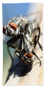 Entomologists Discover Why People Want To Be A Fly On The Wall Beach Towel