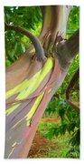 Eucalyptus Tree Beach Towel