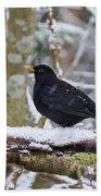 Eurasian Blackbird In The Snow Beach Towel