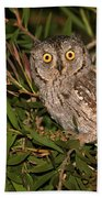 European Scops Owl  Beach Towel