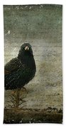 European Starling Beach Towel