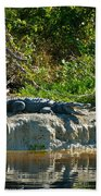 Everglades Crocodile Beach Towel