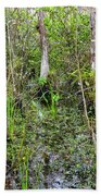 Everglades Swamp Two Beach Towel