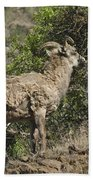 Ewe 1 Beach Towel