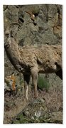 Ewe 2 Beach Towel