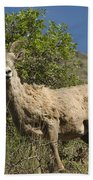 Ewe 3 Beach Towel