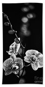 Exotic Orchid Bw Beach Towel