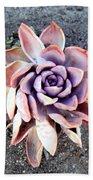 Exotic Succulent Plant - Pink Lilac Beach Towel