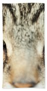 Extreme Close Up Tabby Cat Beach Towel