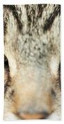 Extreme Close Up Tabby Cat Beach Sheet