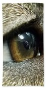 Eye Of The Canine Beach Towel