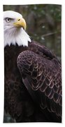 Eye Of The Eagle Beach Towel