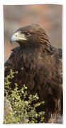 Eye Of The Golden Eagle Beach Towel