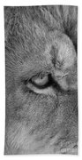 Eye Of The Lion #2  Black And White  Beach Towel