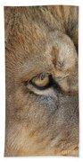 Eye Of The Lion #2 Beach Towel