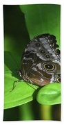 Eyespots On The Closed Wings Of A Blue Morpho Butterfly Beach Sheet