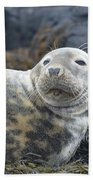 Face Of A Gray Seal Beach Towel