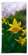 Daffodils Sky Beach Towel