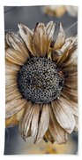 Fading Oxeye Beach Towel