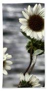Fading Sunflowers Beach Towel