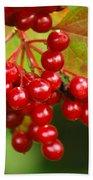 Fall Berries 2 Beach Sheet