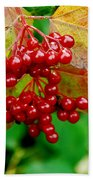 Fall Berries Beach Sheet