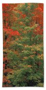 Fall Brilliance Beach Towel