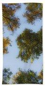 Fall Canopy In Virginia Beach Towel