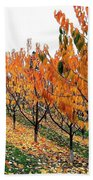 Fall Cherry Orchard Beach Towel