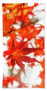 Fall Color Maple Leaves At The Forest In Kochi, Japan Beach Towel