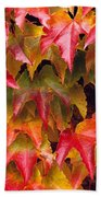 Fall Colored Ivy Beach Towel