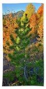 Fall Colors Along Dillon Reservoir Beach Towel