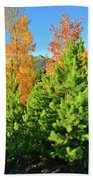 Fall Comes To Dillon Colorado Beach Towel