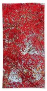 Fall Foilage Beach Towel