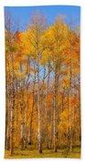 Fall Foliage Color Vertical Image Orton Beach Sheet