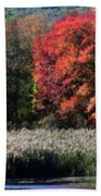 Fall Foliage Marsh Beach Towel