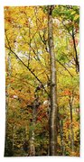 Fall Foliage On The Hike Up Mount Monadnock New Hampshire Beach Towel