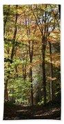 Fall Forest 2 Beach Towel