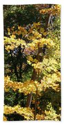 Fall Forest 3 Beach Towel