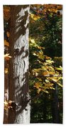 Fall Forest 4 Beach Towel