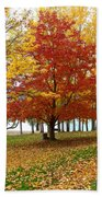 Fall In Kaloya Park 5 Beach Towel