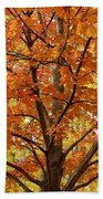 Fall In Kayloya Park 2 Beach Towel