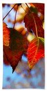Fall In Maple Ridge Beach Towel