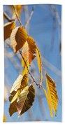 Fall Leaves Study 3 Beach Towel