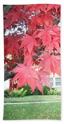 Fall Reds Beach Towel